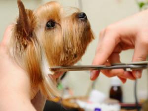Dog Grooming in Ahmedabad