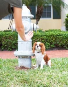 Puppy potty-training