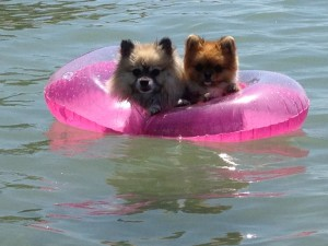 Dogs in Summer